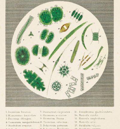 Microorganism-1